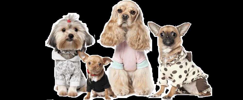 Стрижка собак в Самаре